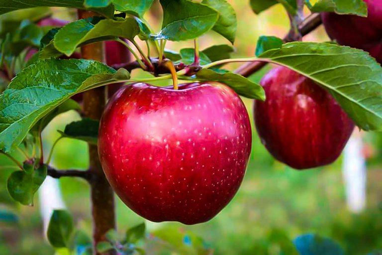 Ovocné stromy a kry